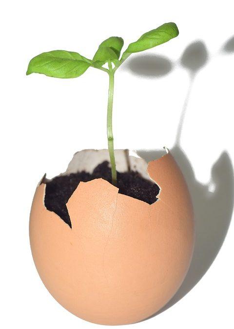 Kasvuyrityksen johtaja – muistitko huolehtia perusasioista?